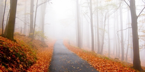 autumn-path-fog.jpg