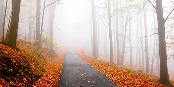 autumn-path-fog.jpg